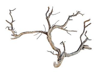 close up of dry branch Fotoväggar