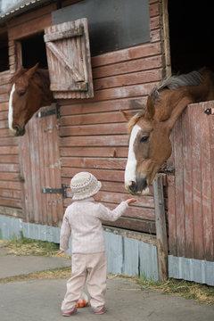 Little Girl feeds the horses