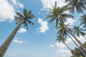 Coconut or Palm Tree, Cloudy Sky and Tropical Beach