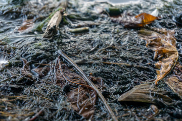 Background of wet autumn ground with leaves and sticks