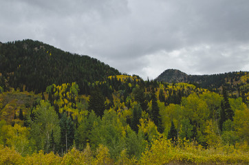The leaves starting to change across the open range of the utah mountains.