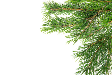 Christmas composition. Christmas tree branch, pine cones, fir branches on white background.