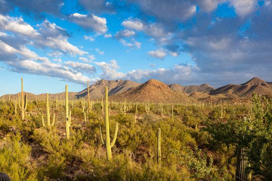 Saguaro National Park American Southwest Sonoran Desert