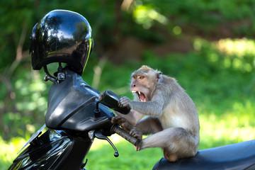 Crzay funny monkey