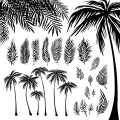 set of black Palm trees silhouette and branches on a white background. Vector illustration, design element for congratulation cards, print, banners and others