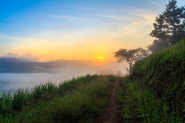 View of earth road and grass flowers covered in foggy during morning sunrise.