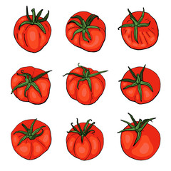 Red tomatoes on white background. Vector. Illustration