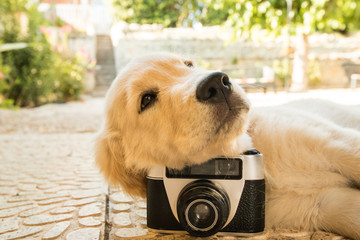 Old camera and puppy dog outdoors