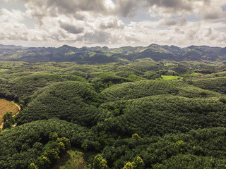 rubber trees industry on the Mountain in Thailand,