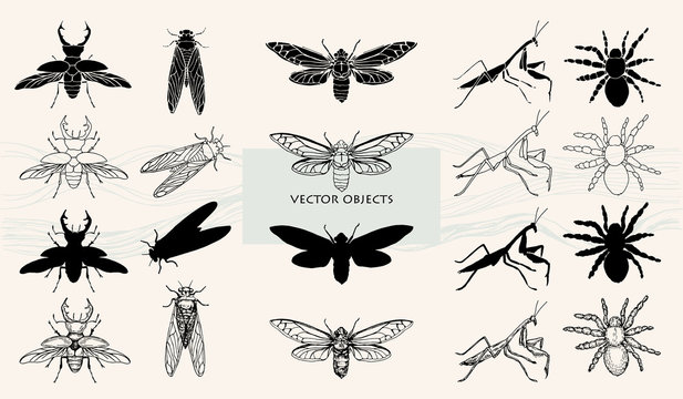Vector illustration. Various style of one object. Insects, beetles and spiders.