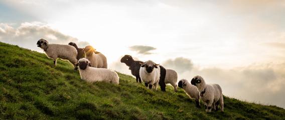 Eine Herde Schafe am Berg
