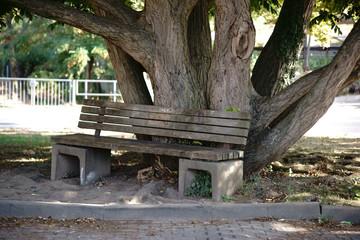 Parkbank unter altem Baum / Eine Parkbank steht an dem knorrigen Baumstamm eines alten Baumes. . .