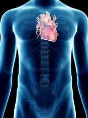 3d rendered medically accurate illustration of a mans heart