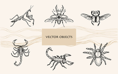 Vector illustration. Pen style vector objects. Scorpions, spider tarantula, mantis, bugs.