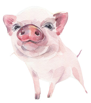 Cute piggy hand painted watercolor illustration on white background. Symbol of New Year 2019.