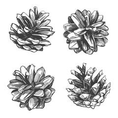 pine cones collection hand drawn vector illustration realistic sketch