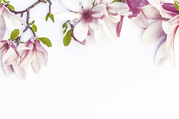 Beautiful magnolia flowers/Magnolia and peach flowers on white background with copy space