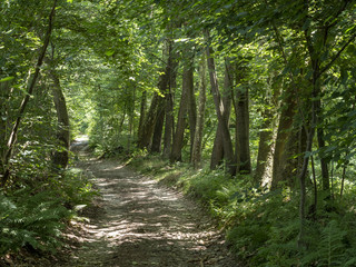 Path in the forest near Agrate Conturbia, italy