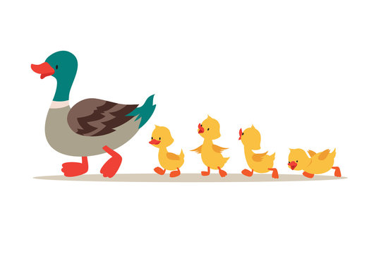 Mother duck and ducklings. Cute baby ducks walking in row. Cartoon vector illustration. Duck mother animal and family duckling