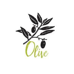 Olive branch. Hand drawn illustration. Vector design.