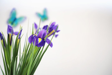 Purple irises on a white background