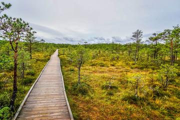 Bog landscape in tallinn, town, old, estonia, europe, baltic, city, autumn, capital, view, architecture, urban, building, travel, landmark, cityscape, medieval, historic, tower, european, street, beau