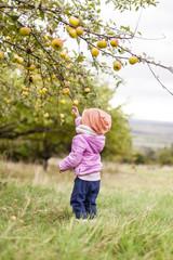 Little girl in pink jacket picking apple from apple tree. Kleines Mädchen in pinker Jacke pflückt Apfel von Apfelbaum.