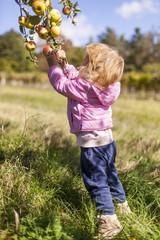 Kleines Mädchen pflückt Apfel von Baum. Little girl picking apple in orchard.