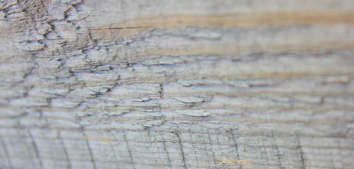 Rough Gray Wooden Wall Texture Background Close Up View. Rustic Old Weathered Pattern of Wooden Panel Surface, Selective Focus. Empty Backdrop of Light Grey Timber Uneven Vintage Wall Surface Detail