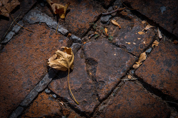 Autumn mood, yelow leaves on red bricks
