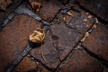 Autumn mood, yelow leaves on red bricks