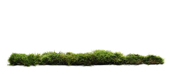 Aluminium Prints Grass Green moss with grass isolated on white background