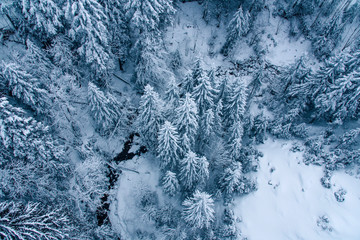 Aerial view of snow covered pine forest in Switzerland.