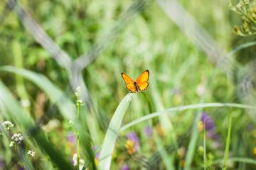 an orange fairy