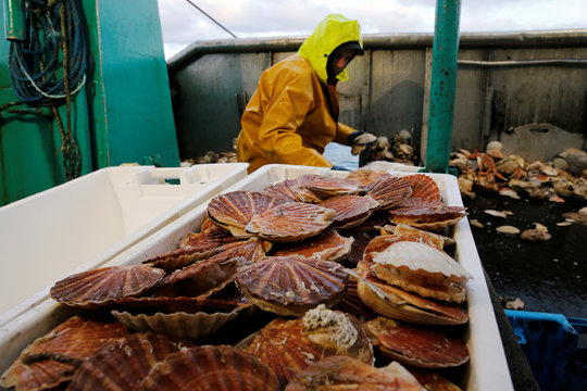 A Fisherman sorts scallops in boxes on the deck of Thierisa trawler during the start of the scallop fishing season, off Port-en-Bessin