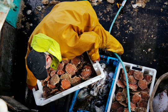 A fisherman holds a box of scallops on the deck of Thierisa trawler during the start of the scallop fishing season in France, off Port-en-Bessin