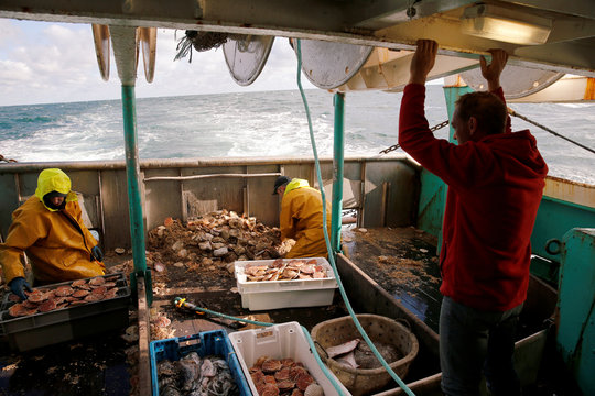 Fishermen sort scallops in boxes on the deck of Thierisa trawler during the start of the scallop fishing season in France, off Port-en-Bessin