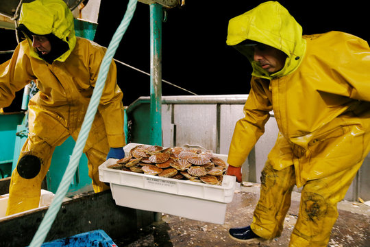 Fishermen carry boxes of scallops on the deck of Thierisa trawler during the start of the scallop fishing season in France,off Port-En-Bessin
