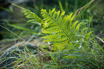 closeup of fern leaves in the forest
