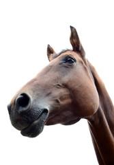 Pferdekopf, Pferdeportrait, Nahaufnahme, freigestellt