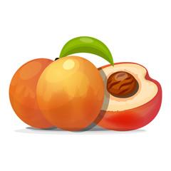 Ripe peaches, whole and slice. Vector illustration.