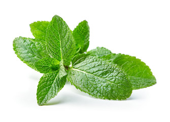 twig of mint leaves isolated on white background