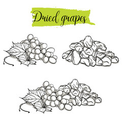 Hand drawn sketch style Grapes set. Single, group fruits, dried, raisin, branch of grapes. Organic food, vector doodle illustrations collection isolated on white background..