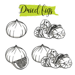 Hand drawn sketch style Fig set. Single, group fruits, slices, dried Figs. Organic food, vector doodle illustrations collection isolated on white background..