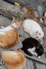 Japan Cat Island