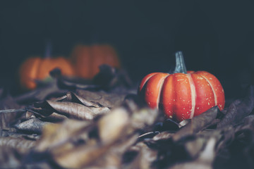 art picture of Halloween concept, dark vintage, copy space for use