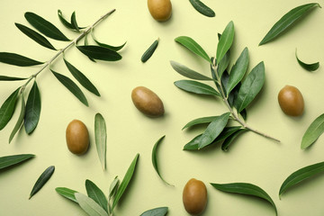 Tuinposter Olijfboom Flat lay composition with fresh green olive leaves, twigs and fruit on color background