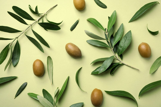 Flat lay composition with fresh green olive leaves, twigs and fruit on color background