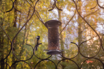 The titmouse looks at a birds feeder