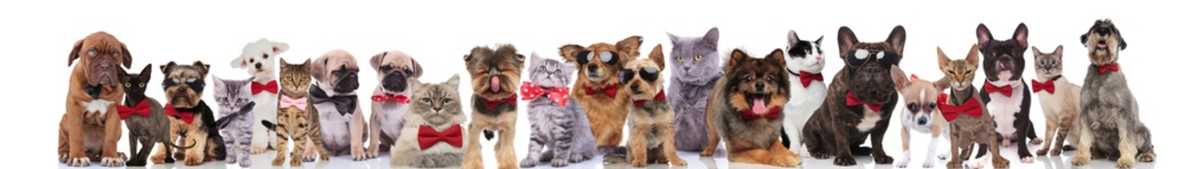 large team of cats and dogs with bowties and sunglasses
